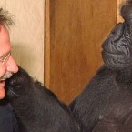 Robin Williams' Mind-Altering Experience with Koko, The Gorilla