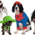 Creatively Cute Halloween Costume Ideas for Your Pets