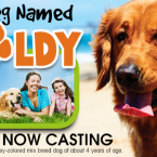 'My Dog Named Goldy' Casting Call for Dog