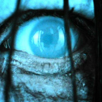 'The Ring 3' Casting Call for Extras